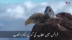 عقاب کی نظر سے دنیا کو دیکھنے کا انوکھا تجربہ