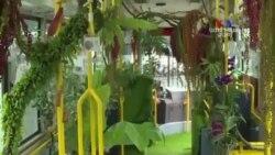 SHORT VIDEO: Թայվանի անտառային ավտոբուսը