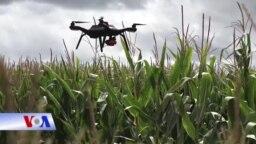 Một chiếc máy bay không người lái có thể sớm trở thành một công cụ quý giá trong nông nghiệp.