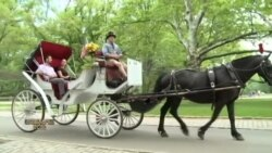 ვინ აპროტესტებს ნიუ იორკში ცხენების გადაადგილებას?