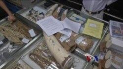 香港计划在五年内全面禁止象牙贸易
