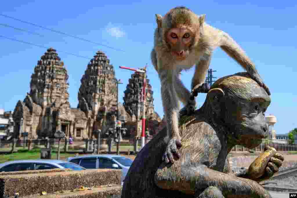 لوپبوری میں پراگ سام یود نامی ایک تاریخی مندر ہے جو بدھ مت کے ماننے والوں کا ہے۔ لیکن یہ جگہ اب بندروں کی وجہ سے مشہور ہے۔
