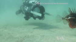 Technology: Robot Fighting Invasive Species