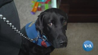 Precious Companionship: How Assistance Dogs Change Lives