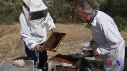 Kiprni birlashtirish harakati