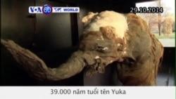 Một con voi ma-mút 39.000 năm tuổi được đưa đến Nga (VOA60)
