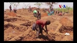 """Malawi e os """"agricultores"""" do ouro"""
