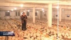Najava izvoza piletine u EU dala nadu povratnicima u Konjević Polje