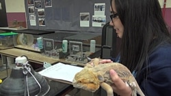 Animals Become Teachers in the Classroom