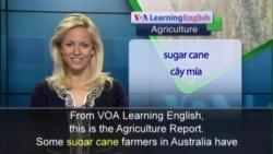 Anh ngữ đặc biệt: Science Farming (VOA)
