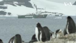 Тиша та розмови тварин: експедиція Greenpeace в Антарктику. Відео