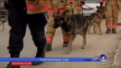 گزارشی از آموزش سگهای امدادگر در آمریکا