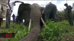 Tanzania kutumia vifaaa maalumu kulinda Tembo