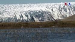İqlim dəyişikliyi Arktikada ağcaqanad sayının artmasına gətirib çıxara bilər