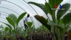 Baltimore'da Çiftlik Projesiyle Açlar Doyuyor