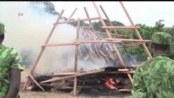 Marfim destruído em Londres para travar caça furtiva