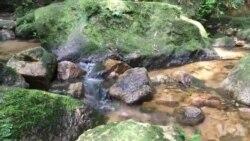 جنگل بارانی تیجوکا