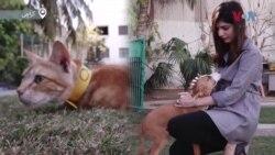 جانوروں کا تحفظ: 'والدین بتاتے ہوئے شرماتے ہیں کہ بیٹی یہ کام کرتی ہے'
