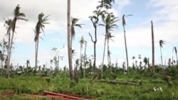 Philippines Coconut Industry Struggles to Recover after Typhon Haiyan