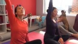 Doga: Yoga Bersama Anjing Peliharaan