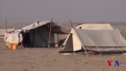 Afg'onistonlik qochqinlar taqdiri