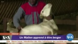Un Malien apprend à être berger
