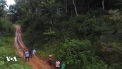L'exploitation de la forêt d'Ebo fait toujours polémique entre Camerounais