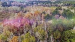 [아메리카 시골 체험단] 웨스트버지니아의 수공예 유리공장