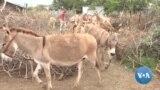 Kenya Donkey Owners Demand Permanent Ban on Animals' Slaughter