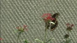 Павильон бабочек в Лос-Анджелесе