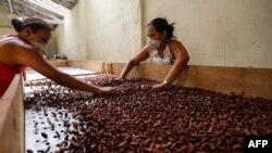 Brazilian Altiele Carvalho dos Santos, 32, and Gloria de Jesus Santos, 36, sort cocoa beans at the Altamira farm in Itajuipe, Bahia state, Brazil, Dec. 13, 2019.
