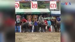 تھائی لینڈ میں بھینسوں کی ریس