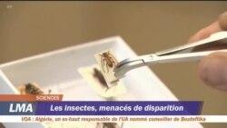 Les insectes menacés de disparition