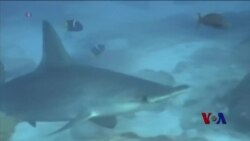 厄尔尼诺现象使鱼群从墨西哥游到加州