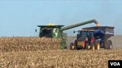 2019年10月12日伊利诺伊州农民收获玉米。