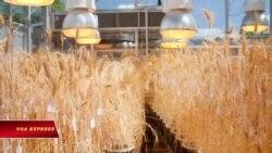 Kỹ thuật nuôi trồng tốc độ nuôi sống dân số thế giới