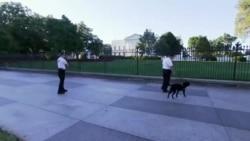 백악관, 무단침입 사건 후 경비 강화