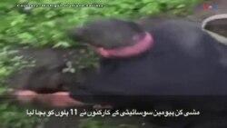 مشی گن: بروقت کارروائی کرکے 11 پِلوں کو بچا لیا گیا