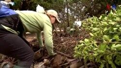 Voluntarios buscan objetos perdidos tras los mortales deslaves de California