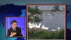 世界媒体看中国:禽流感新消息