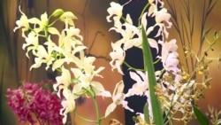 Orchids Bring Joy, Inspire Artists in New Exhibit