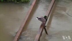 Poplave u Bosanskoj Krupi