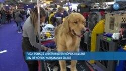 'En İyi Köpek' Seçilmek İçin Yarıştılar