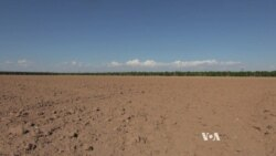 Arizona Fallows Farms to Save Water for Cities
