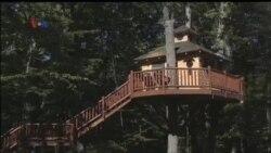 Rumah Pohon: Bagian dari Mimpi