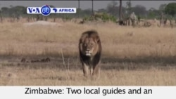 VOA60 Africa- Zimbabwe: Two local guides and an American dentist face possible criminal charges for killing Cecil the Lion- July 29, 2015
