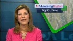 Are Big Farms Better?