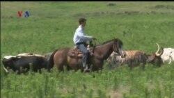 Mengenal Kehidupan Sebagai Cowboy