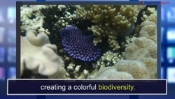 News Words: Biodiversity