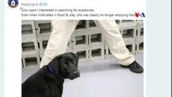 Լուլու անունով շանը հեռացրել են աշխատանքից